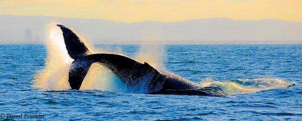 Whale watching: alla scoperta dei cetacei con tutta la famiglia