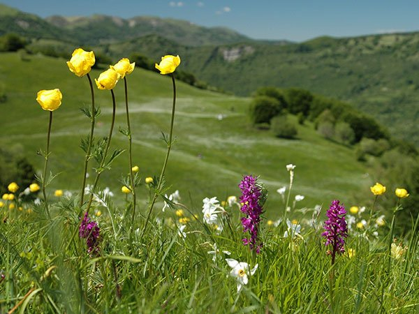 fioriture-al-parco-dell'antola