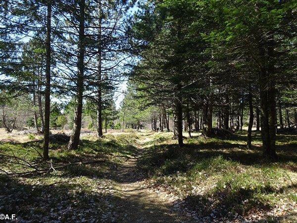 passeggiata-nei-boschi-liguri-val-rebbia