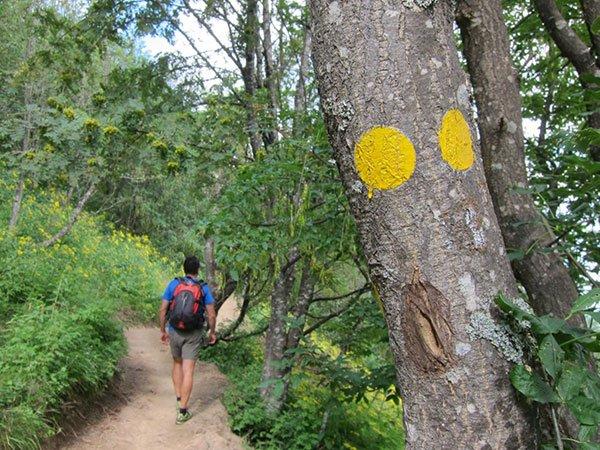 passeggiata-nei-boschi-parco-antola