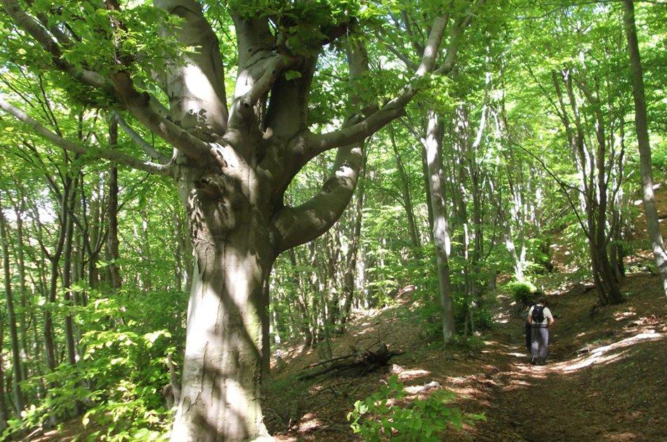 boschi adelasia