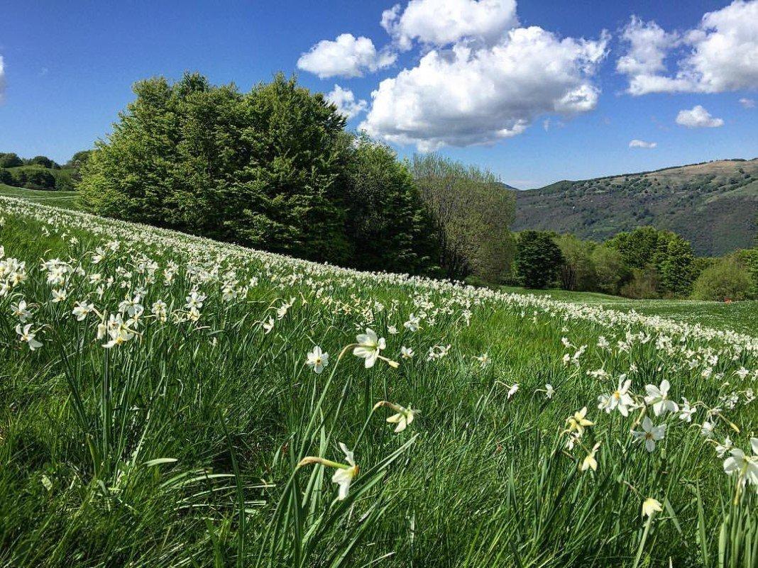 le fioriture del parco dell'antola