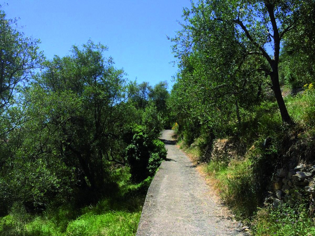 sentiero del parco del Ciapà