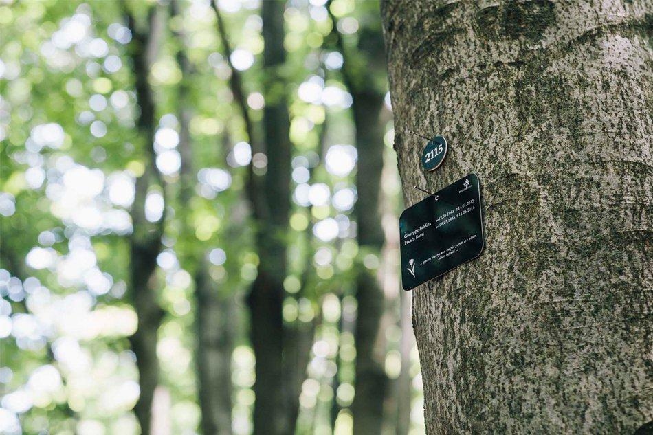 Sassello-foresta-della-deiva