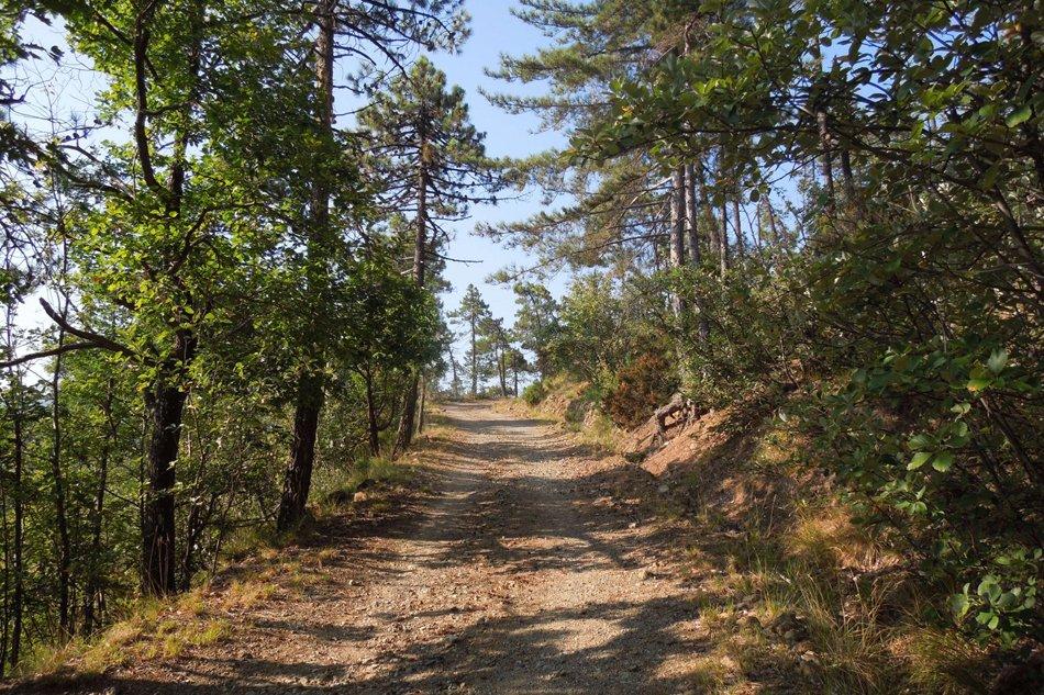 sentiero-nella-foresta-della-deiva